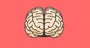 دو نیم کره مغز ما
